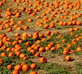 Halloween fall activities in the OC